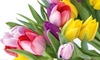 Tulip Holland's Best Mix: $9.99 for 33-Count Pack of Tulip Holland's Best Mixed Tulip Bulbs ($39.99 List Price). Free Returns.