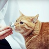 Up to 68% Off Pet Care in Aldergrove