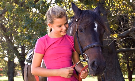 Two 45-Minute Private Horseback-Riding Lessons for One or Two at Luton Training Center (Up to 51% Off)