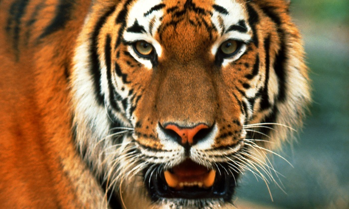 Austin Zoo - Southwest Travis: Visit for Two or Four to Austin Zoo (Up to Half Off)