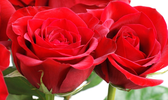 Cleveland Florist - Multiple Locations: One or Two Dozen Long-Stemmed Roses or $20 for $40 Worth of In-Store Flowers at Cleveland Florist