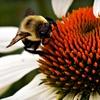 Up to 60% Off Beekeeping Workshop in Soquel