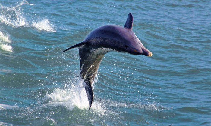 Florida West Coast Cruises - Dolphin Racer Speedboat Adventure: $14 for a Dolphin-Watching Speedboat Trip from Dolphin Racer Speedboat Adventure (Up to $24.95 Value)