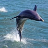 44% Off Dolphin-Watching Speedboat Trip