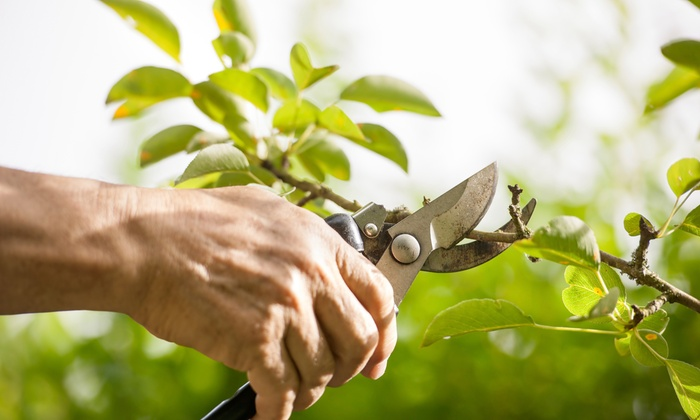 Green Acres Lawn & Shrub Care - Allentown / Reading: 4 Hours of Tree Trimming from green acres lawn& shrub care (44% Off)