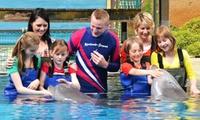 """Rencontrez les dauphins! Pack: """"Dans l'eau avec les dauphins"""", Dolphin Show, entrée à Bobos Indoor au Boudewijn Seapark"""