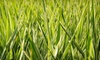 XL100Store.ca : Two, Four, or Six 1 kg Bags of Canada Green Velocity Grass Seed from XL100Store.ca (Up to 53% Off)