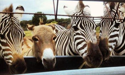 Tours and Pony Rides at Why Not an American Ark Equestrian Park and Two by Two Petting Zoo (Up to 50% Off)