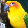 Up to 54% Off a Visit to Exotic-Animal Rescue Center