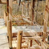 50% Off Ropes Course at R Adventure Park