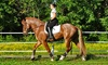 SLM Dressage - Southampton: One or Three Personal Horseback-Riding Lessons with Optional On-Location Lessons at SLM Dressage (Up to 56% Off)