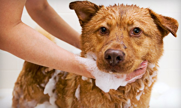 The Pet Lounge - Hillcrest: $49 for Six Self-Serve Dog Washes at The Pet Lounge ($108 Value)