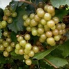 Half Off Winery Tour and Tasting in Graham