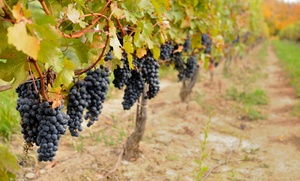 Montoliva Vineyard and Winery: $38 for Tour and Tasting with Four Bottles of Wine at Montoliva Vineyard and Winery ($100 Value)