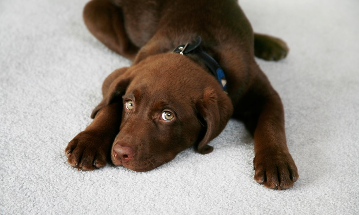 Cat Dog Poop Patrol - Tucson: $10 for $26 Groupon — Cat Dog Poop Patrol