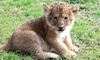 Up to 49% Off at The Zoo in Forest Park and Education Center