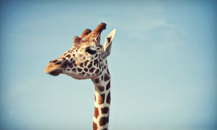 African Safari Wildlife Park - Port Clinton: African Safari Wildlife Park Visit on Weekday or Any Day (Up to 73% Off)