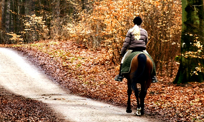 12 Mile Stables - Dam East/West: One or Three One-Hour Intro to Horsemanship Riding Lessons at 12 Mile Stables (Up to 57% Off)