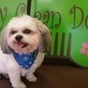 40% Off Grooming Services