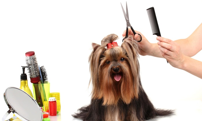 Michelle's Compassionate Grooming - New Cumberland: $10 Worth of Services