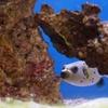 Up to 55% Off Aquarium Visit or Membership
