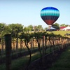 50% Off Wine and Tours at Noboleis Vineyards