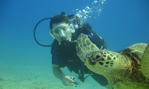 Scuba Phil Las Vegas: Scuba-Diving Certification at Scuba Phil Las Vegas (57% Off)