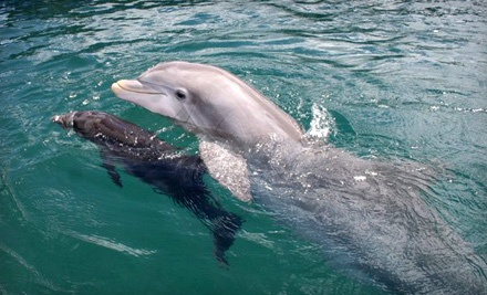 Shelling Excursion on Morris Island or a Dolphin Tour for Four from Harborview Charters (Up to 52% Off)