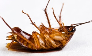 Castle Pest Management: $72 for $160 Worth of Pest-Control Services — Castle Pest Management