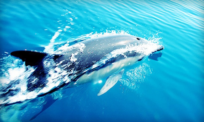 Cape May Whale Watch & Research Center - Lower: Whale or Dolphin Watching for One or Two from Cape May Whale Watch & Research Center (Up to 55% Off)