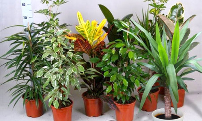 Lot de plantes d 39 int rieur groupon shopping for Ou acheter plante interieur