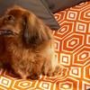 Memory-Foam Topper Pillow Pet Beds