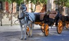 30% Off Horse Drawn Carriage