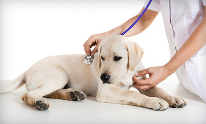 Seven Oaks Animal Hospital - Northwest Columbia: Pet Exam with Grooming and Optional Canine Vaccines and Bloodwork at Seven Oaks Animal Hospital (Up to 66% Off)