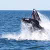Up to 51% Off a Whale- and Dolphin-Watching Cruise