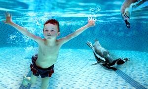 Spreewelten Bad: Erwachsenen-Tageskarte für Bad und Sauna oder Familien-Tageskarte im Spreewelten Bad (50% sparen*)
