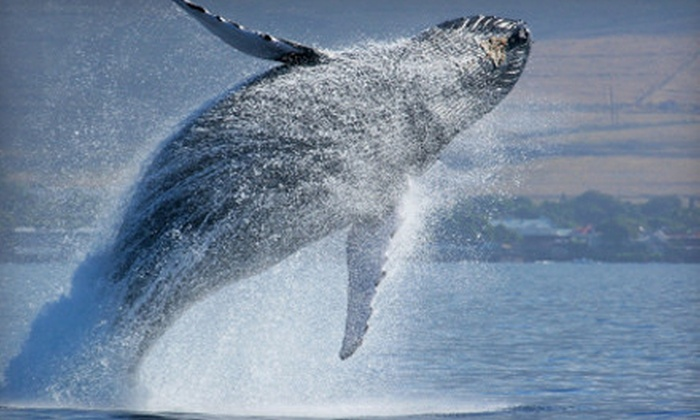 Starlight Fleet - Wildwood Crest: Whale- or Dolphin-Watching Cruise for Two or Four from Starlight Fleet in Wildwood Crest (Up to 53% Off)
