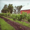 52% Off Apple Picking and Winery Toury