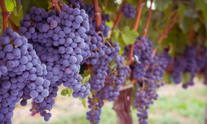 Cellar Door Wine Tours - Newberg: $86 for a Three-Hour Wine Tour for Two from Cellar Door Wine Tours ($175 Value)