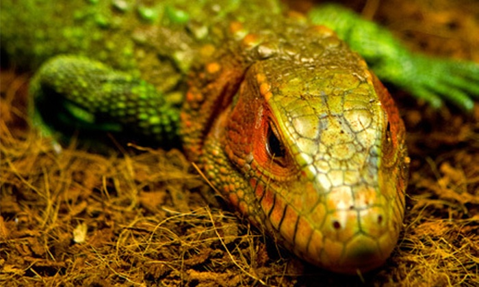 The Reptile Zoo - Monroe: Visit for Two or Four to The Reptile Zoo (Half Off)