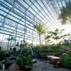 Up to Half Off at Nicholas Conservatory & Gardens