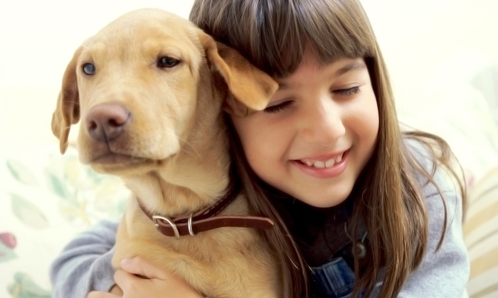 Puppy Land - Germantown: Doggie Day Care for a Day, or Overnight Stay for One or Two at Puppy Land (Up to 51% Off)