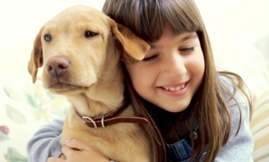 Puppy Land: Doggie Day Care for a Day, or Overnight Stay for One or Two at Puppy Land (Up to 51% Off)
