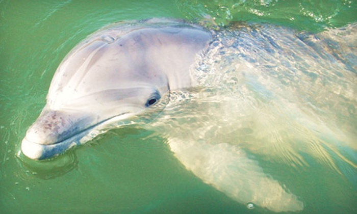 Island Time Charters - Hilton Head Island: $150 for a Private Two-Hour Dolphin and Nature Cruise for Up to Six from Island Time Charters ($300 Value)