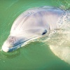 Half Off Private Two-Hour Dolphin Nature Cruise for Up to Six