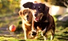 Up to 57% Off Home Dog Boarding and Pet Services