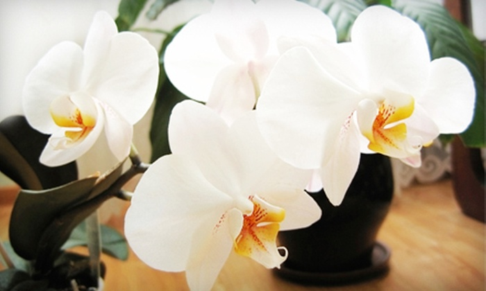 Emerald City Orchids - Ballard,Whittier Heights,Phinney: Orchid Arrangement with Wine or $45 for $100 Worth of Orchids and Café Food at Emerald City Orchids
