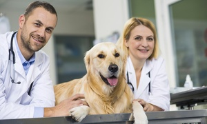 Online Academies: £29 for a Veterinary Support Assistant Diploma at Online Academies (85% Off)