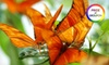 Conservatory of flowers - Golden Gate Park: One-Year Individual, Family, or Begonia Guild Membership at the Conservatory of Flowers (Up to 53% Off)
