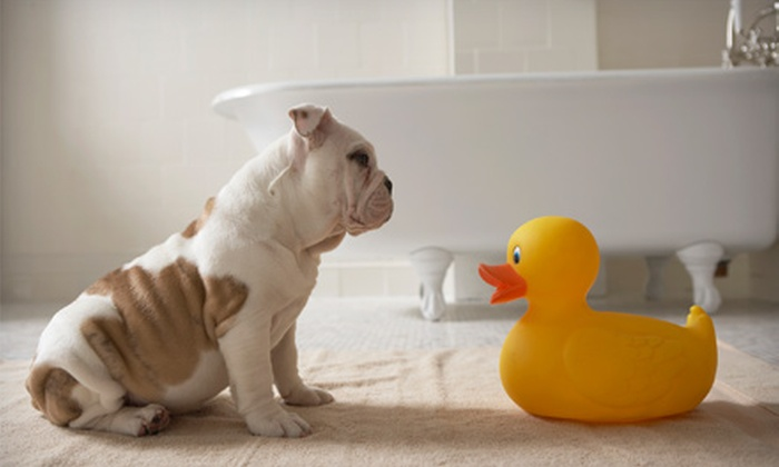 Boon Pet Care - Houston: $30 for $60 Worth of Pet Care at Boon Pet Care